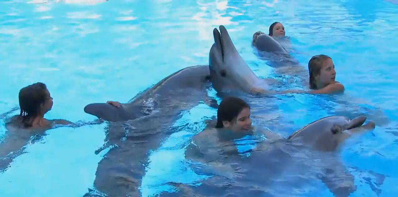 Candid-HD Videos Amazing Dolphin Encounter - 1